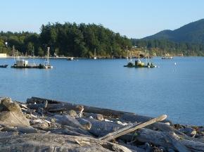 legoe bay reefnet boats