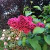 Bloomin' lilac at LIBH