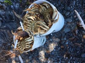 Crab Haul