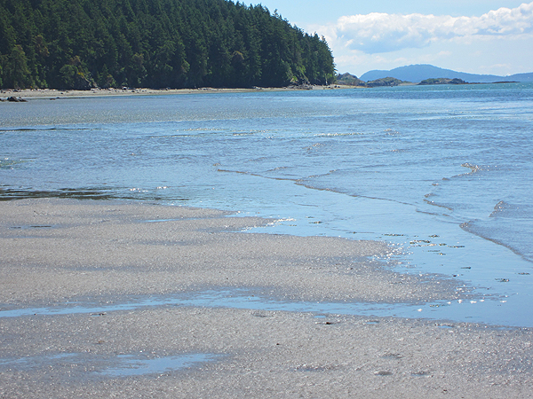 low tide on the west side of lummi island